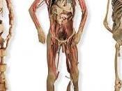 Sistemas aparatos cuerpo humano