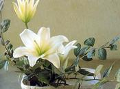 Ikebana, arte delicado.
