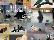 Consejos para mejorar fotografías fauna