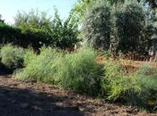 Abundante presencia mariquitas huerto noviembre, consecuencia cambio climatico?
