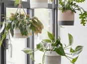 Opciones diez para decorar plantas colgadas...