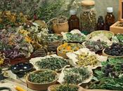 Usos plantas medicinales fitoterapia