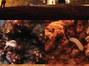 Diversidad especies cueva dolomítica Brasil