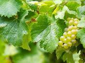 vinos biodinámicos