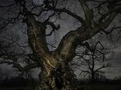 Impresionantes fotos árboles antiguos contra cielos estrellados