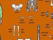 Skeleton muscles games