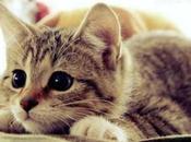 ¿Cómo Calcular Edad Humana Gato? Descubre Hasta Llegan Felinos.