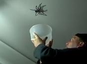 Intenta atrapar araña gigante casa acaba…