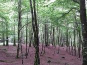 Ochagavía Selva Irati