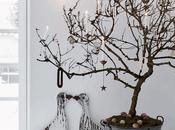 Árboles Navidad diferentes, vida detrás típico abeto navideño