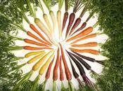 guerra zanahoria