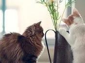 Acércate gatito...