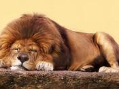 león está durmiendo esta noche.