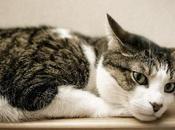 Causa Dolor Oído Gatos. Como Evitar Ácaros Nuestra Mascota