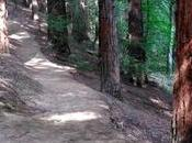 secuoyas Monte Cabezón: California Cantabria