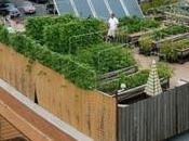 Cultivar tejados está moda Londres