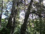 Bosques arboledas