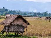 Laos días