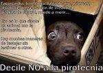 Petardos. Consejos para nuestras mascotas