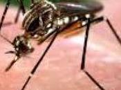 marzo ingresará país primer lote vacuna contra dengue.