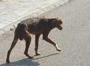 Steve huesos asustado,no aguantará calle. (Córdoba)