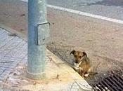 Perrito pequeño lado carretera- Provincia Badajoz