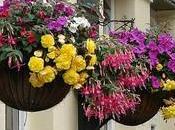 Cestas colgantes flores