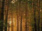 Aokigahara: bosque japonés suidicios.
