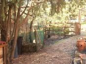 compost hojas caídas otoño: buena enmienda para suelo nuestro jardín.