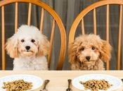 Aprende descifrar ingredientes pienso para mascotas