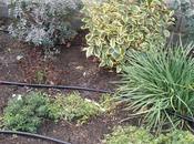 Buscando equilibro entre trabajo placer jardín. Reflexiones jardinera joven.