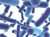 Bifidobacterium infantis: Usos Beneficios Contraindicaciones