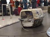 Requisitos para Viajar Mascotas Avión