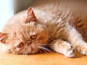 Golpe Calor Gatos: Como Podemos Detectar Esta Dolencia Nuestra Mascota.