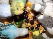 Frutas Vegetales Comen Periquitos? ¡Los Mejores Manjares Para Mascota!