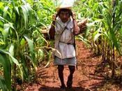 INSÓLITO: Agricultores mayas toman experiencia Cuba