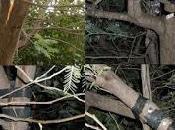 Reparación rama rota árbol. Proceso paso paso.