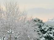 Polenta+Pimientos dulces mucha nieve