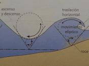 Formación olas