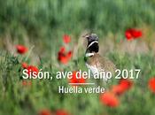 Sisón, 2017