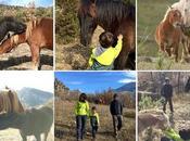 entre caballos libertad Fundación Miranda
