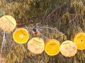Guirnalda frutas semillas para unos pequeños herrerillos comunes