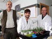 Estudian plantas Almadén Quintín capaces sobrevivir entre metales pesados