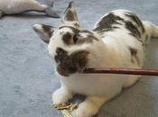 Mejores Juguetes Para Conejos Diversión Mascota!