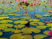 Tailandia enero