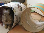 Cómo Hacer Juguetes Para Conejos Casa Ideas Sencillas ¡Que Ellos Amarán!