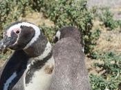 ¡Por pingüinos Punta Tombo!