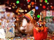 Ideas para regalar niña años. acerca cumpleaños Marcela.