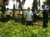 Agricultura conservación: opción viable Manatí (+fotos audio)
