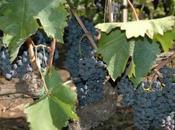 Vinos Etna: segundo vértice triángulo volcánico vinícola